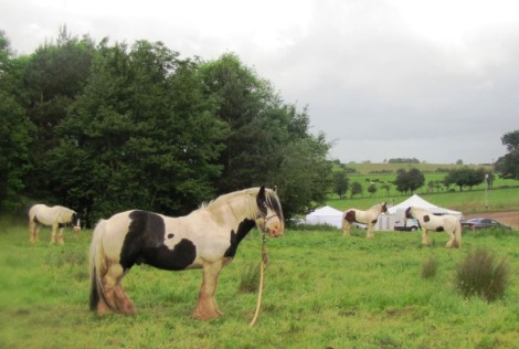 Ponies grazing in field wth Mission tents in background