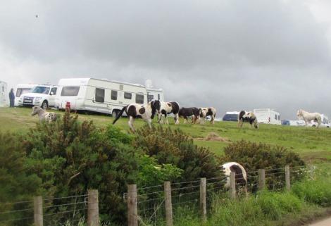 Caravans, vehicles and ponies in field